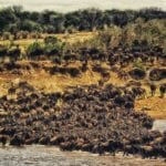 Travel Inspiration: Masai Mara – The home of the wild beauties of East Africa